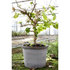 Galestro havekrukke passer godt til store planter
