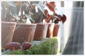 frostsikre italienske blomsterkrukker