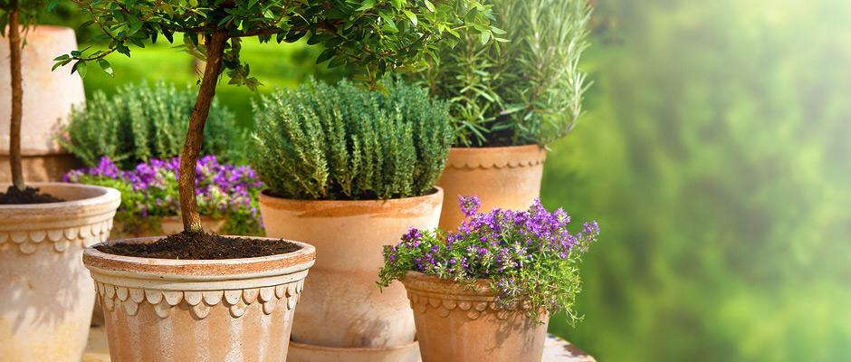 Genpotte plante