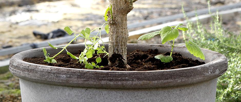 jordtyper til hvilke planter