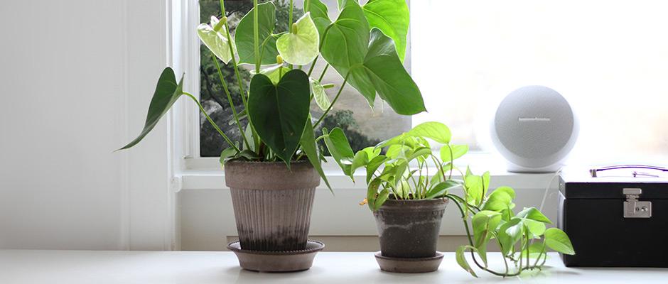 plante og placering