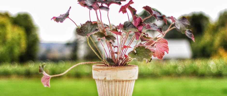 Undgå plantesygdomme